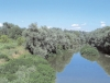 The Panfilia Wood