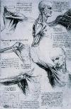 Il Museo anatomico 'Giovanni Tumiati'